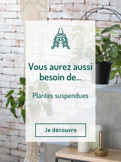 plantes_suspendues