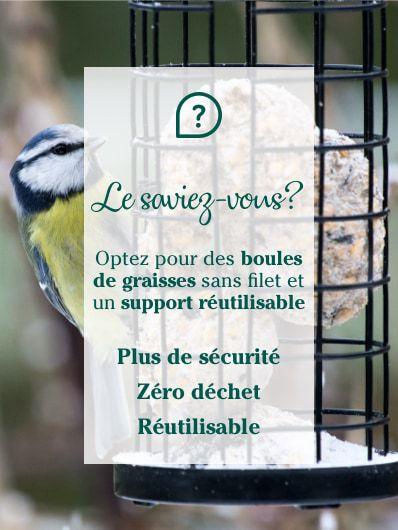 oiseaux-du-jardin-sans-filet