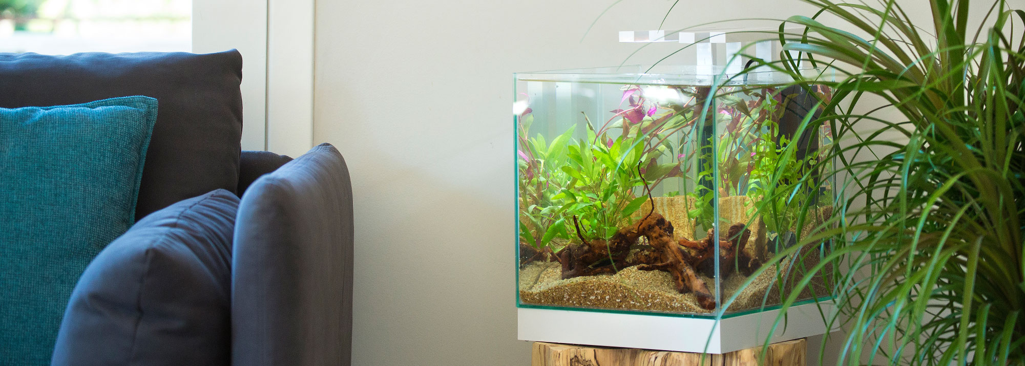 Filtrations pour aquariums