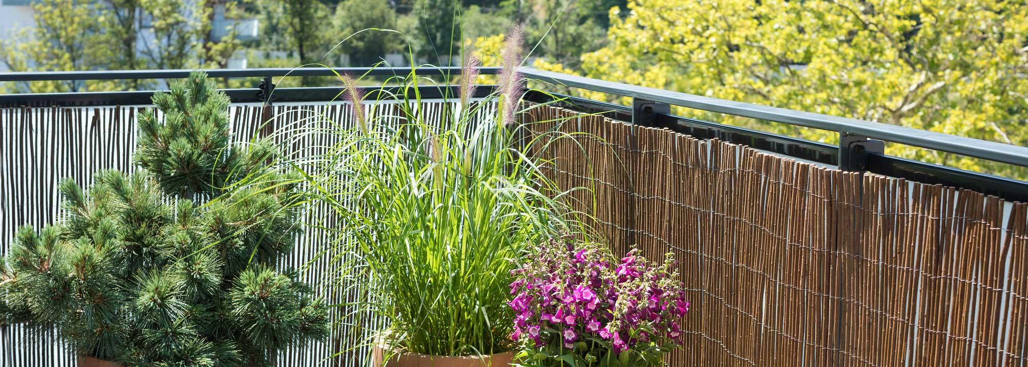 Pallissades, clotures et canisses du jardin : Aménagement et ...