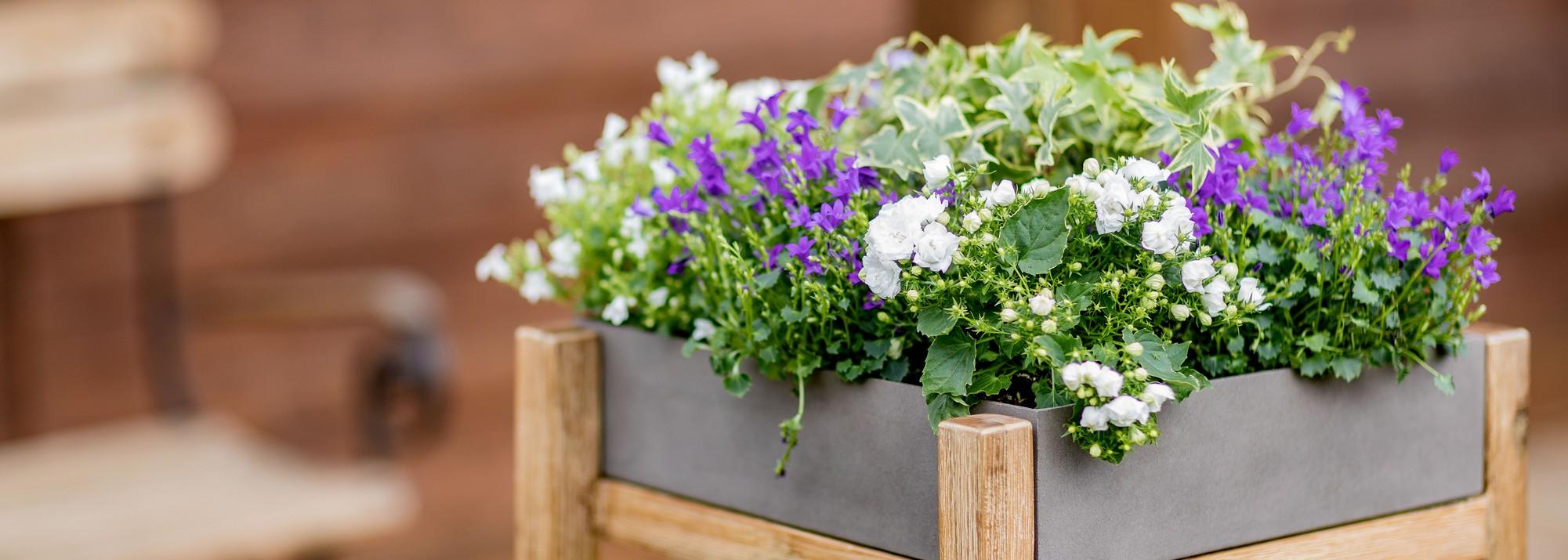 Petites Plantes Fleuries En Pot plantes vivaces : botanic®, votre plante vivace - botanic®