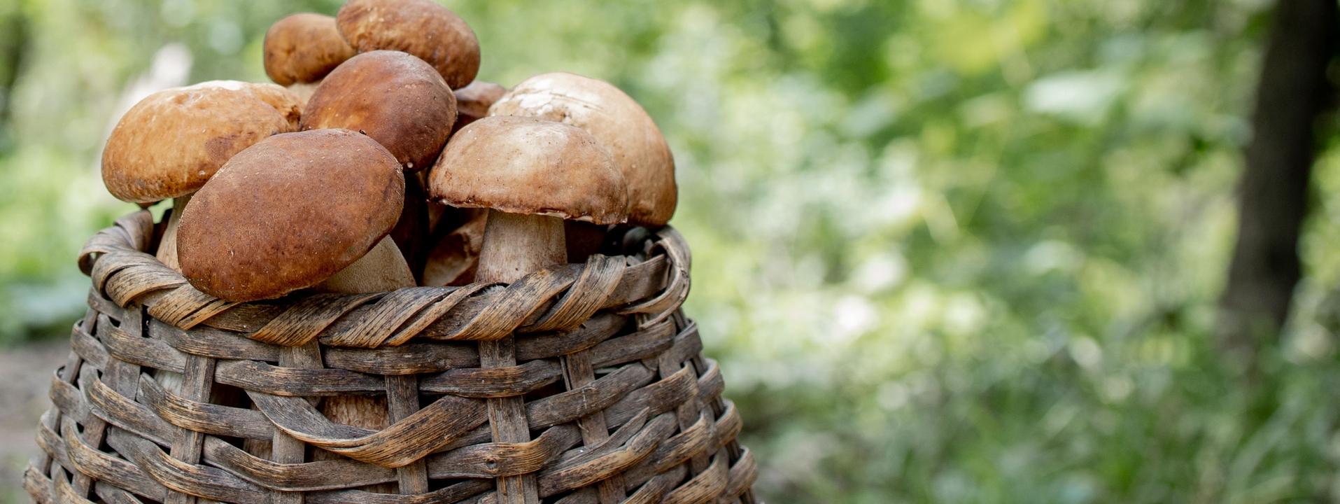 Les champignons, stars de l'automne