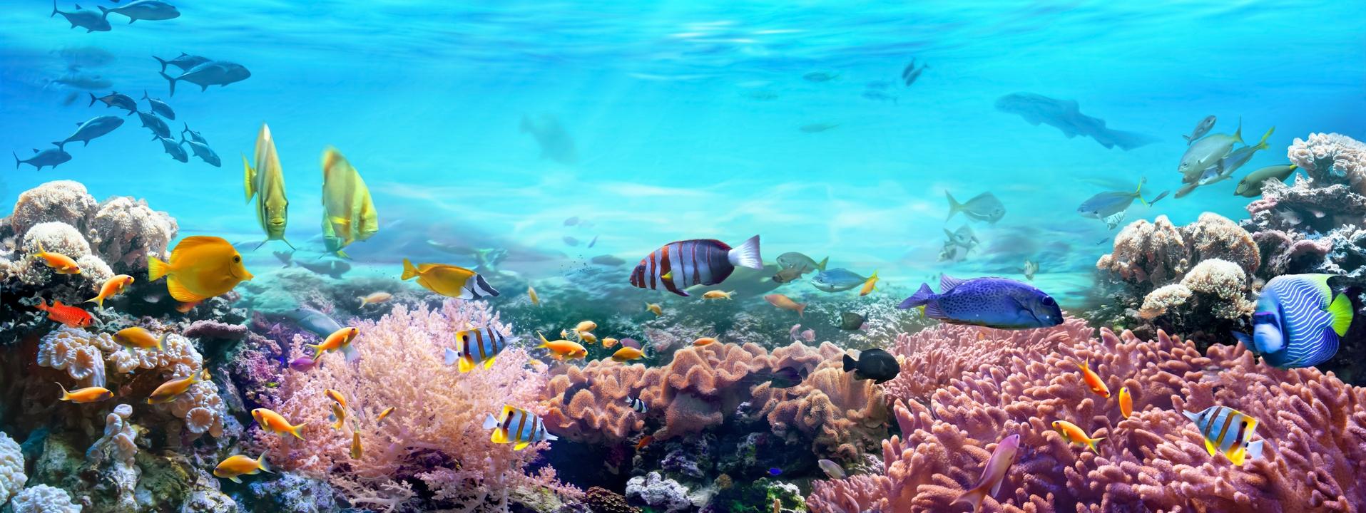 Aquariophilie eau de mer