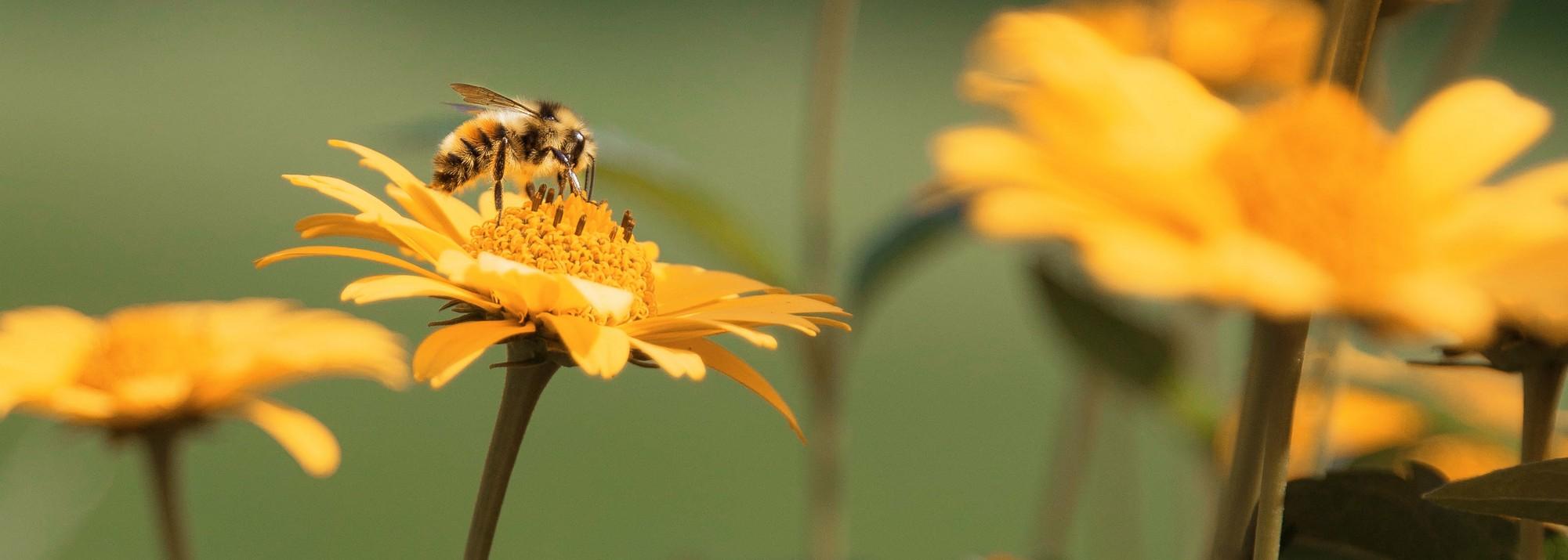 Abeilles et matériel d'apiculture