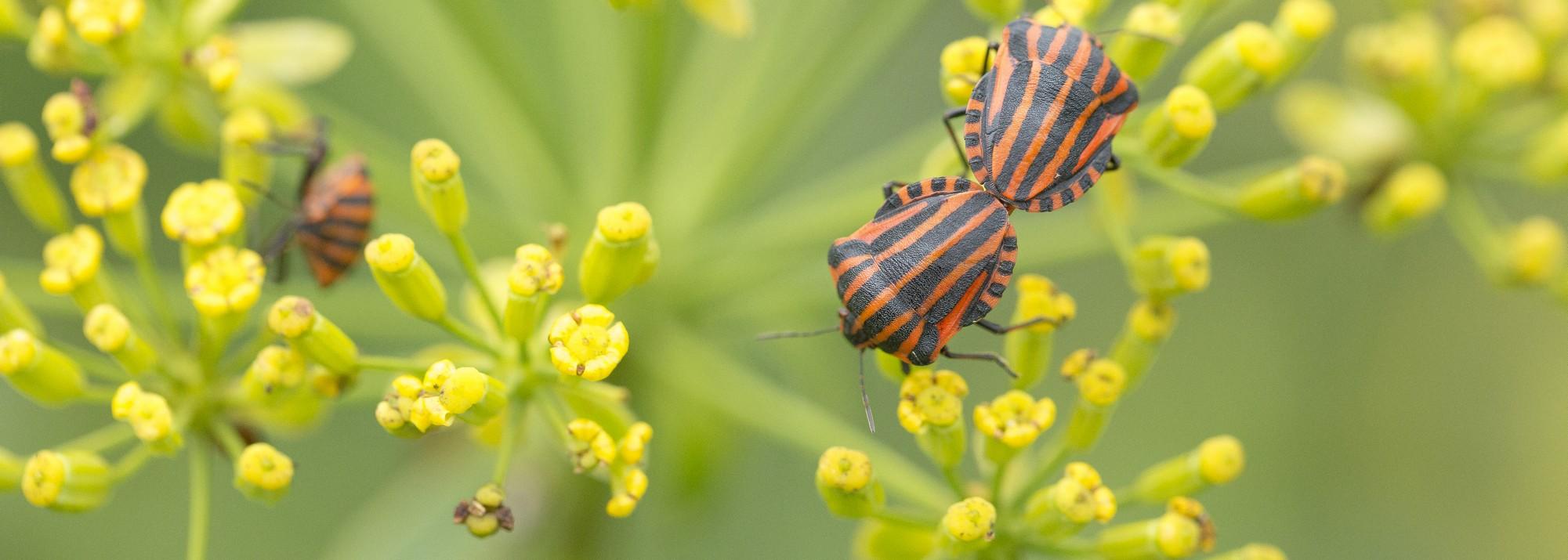 Plantes pour la biodiversité
