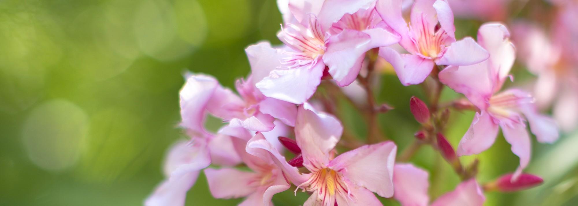 Plantes De Terrasse Arbustes jardin d'ornement : botanic®, arbustes pour haie et arbres d
