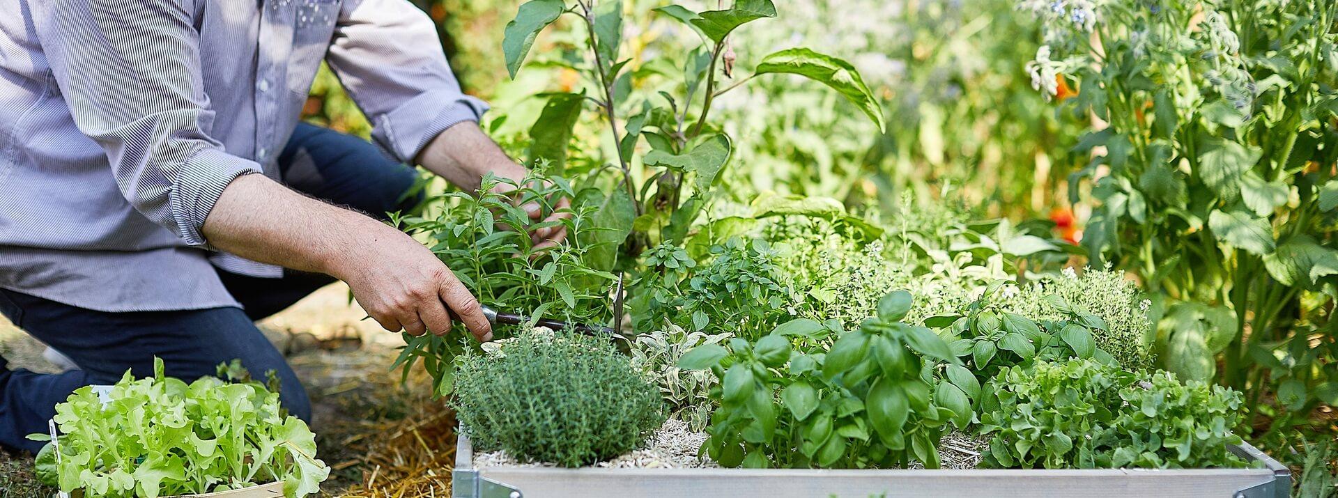 Nos plants potager en pots compostables