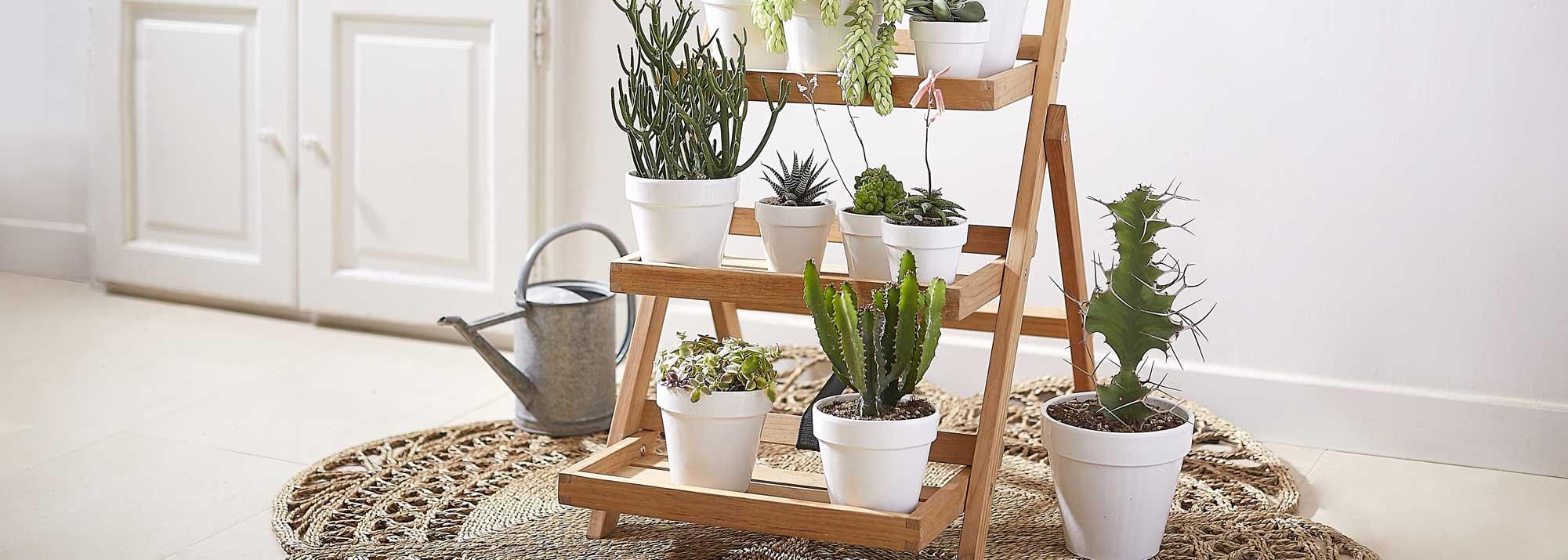 plante grasse et cact es botanic cactus et plantes. Black Bedroom Furniture Sets. Home Design Ideas