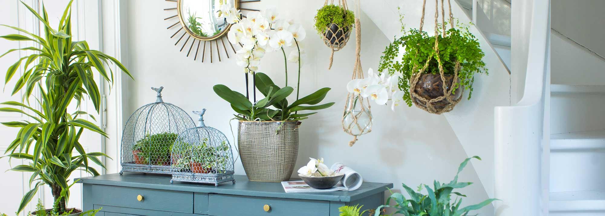 Petites Plantes Fleuries En Pot plantes et fleurs artificielles : décoration intérieure et