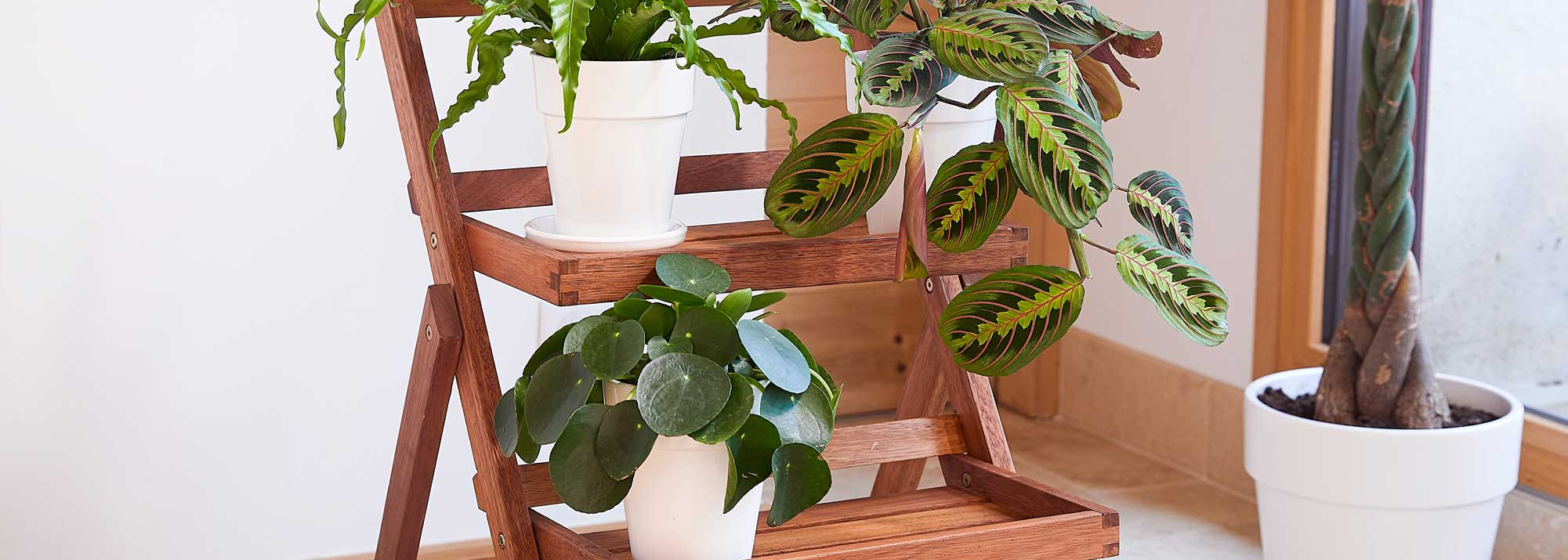 Plantes d'intérieur facile à entretenir