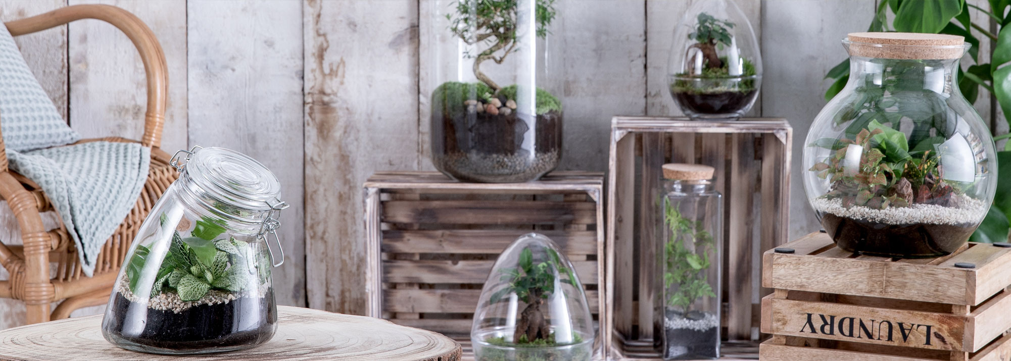 Terrarium Fermé Plante Grasse terrariums déco et mini-jardins de verre - botanic®