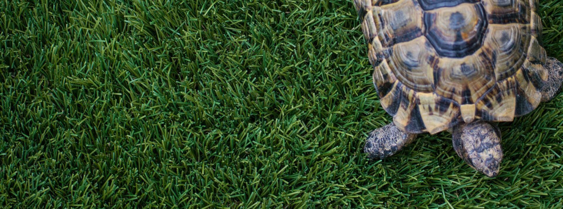Alimentation des reptiles