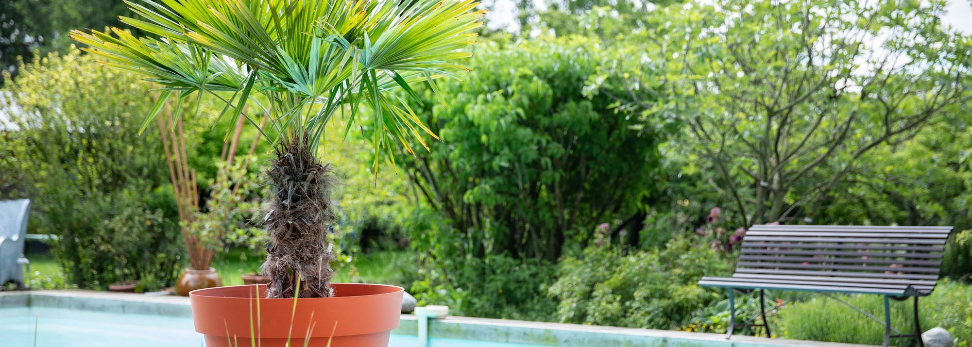 Palmiers balcon et terrasse