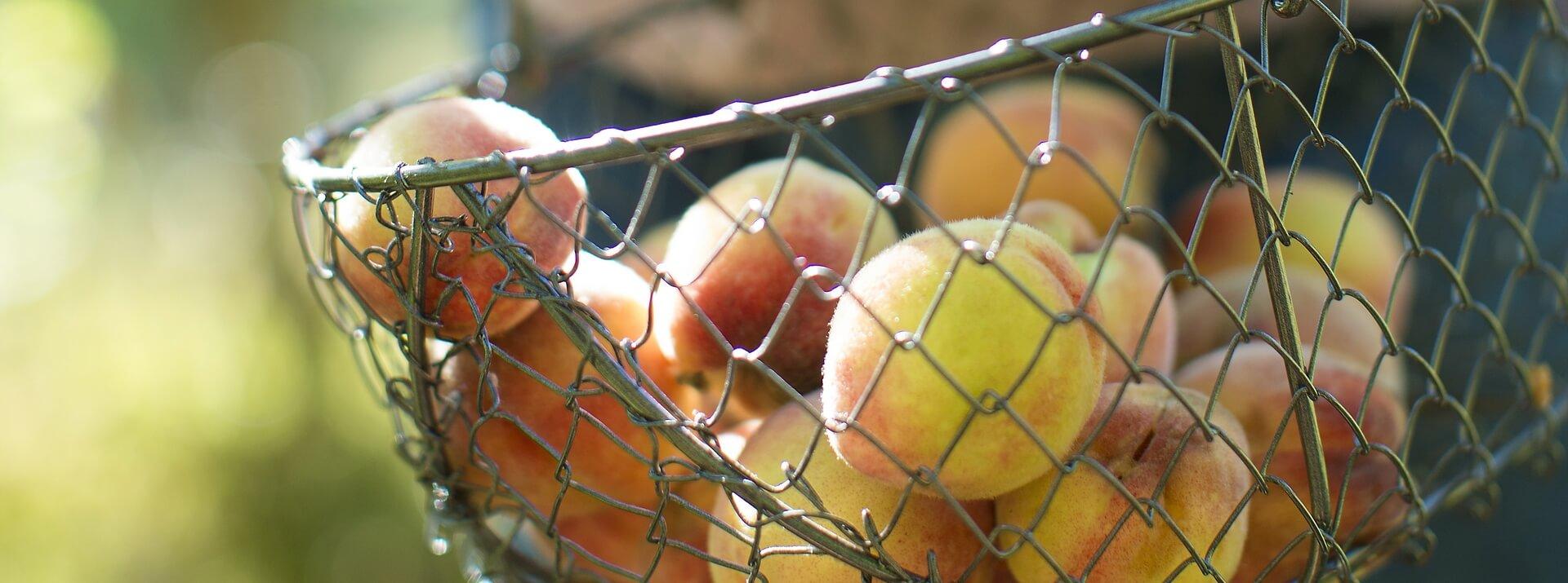 Paniers à récolte