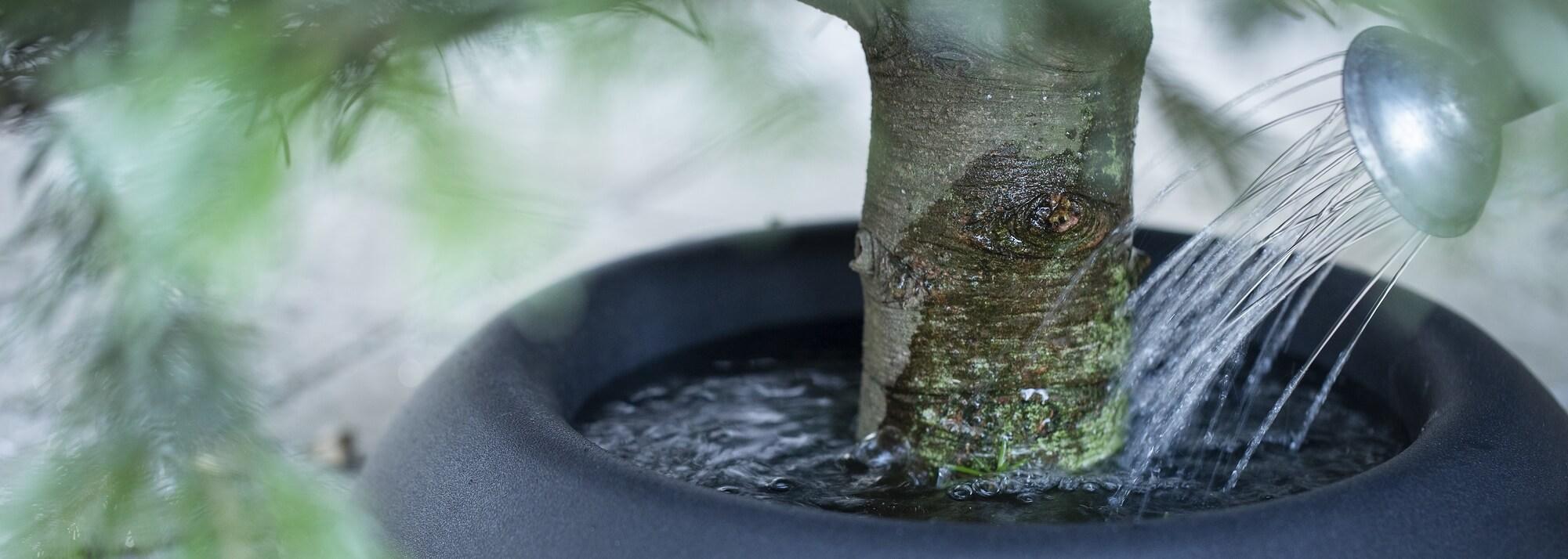 Pieds de sapin à réserve d'eau