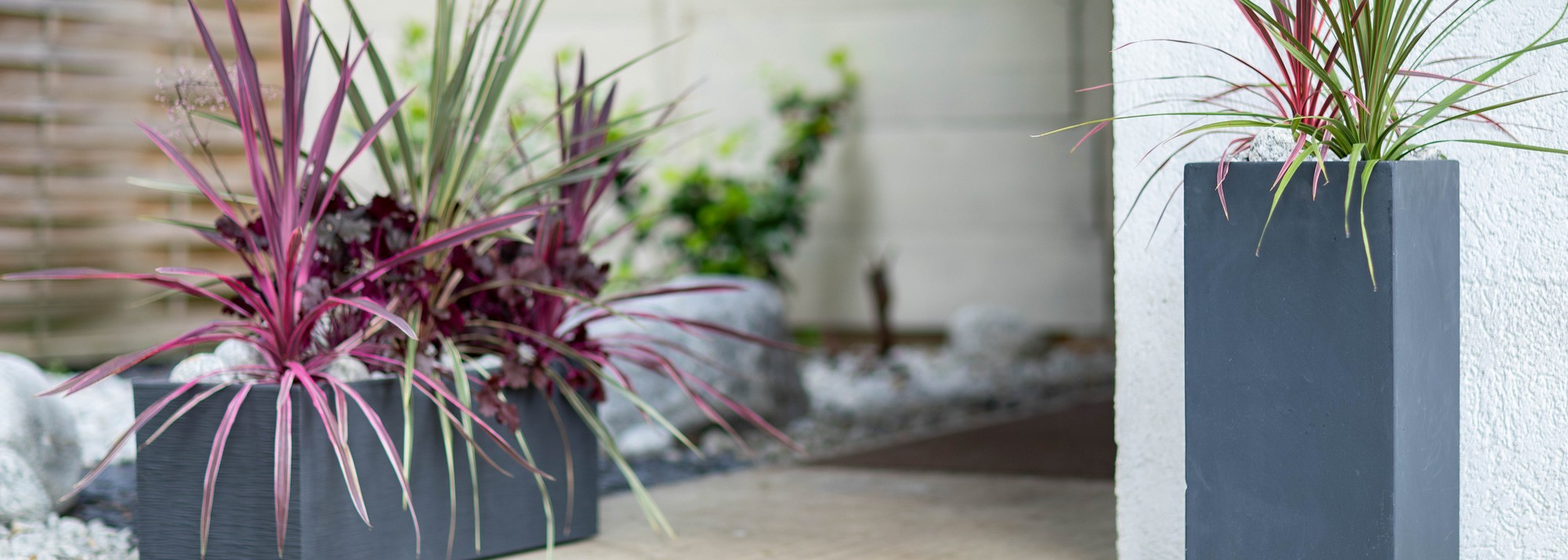 Plantes Pour Jardinieres Plantes Balcon Et Terrasse Et