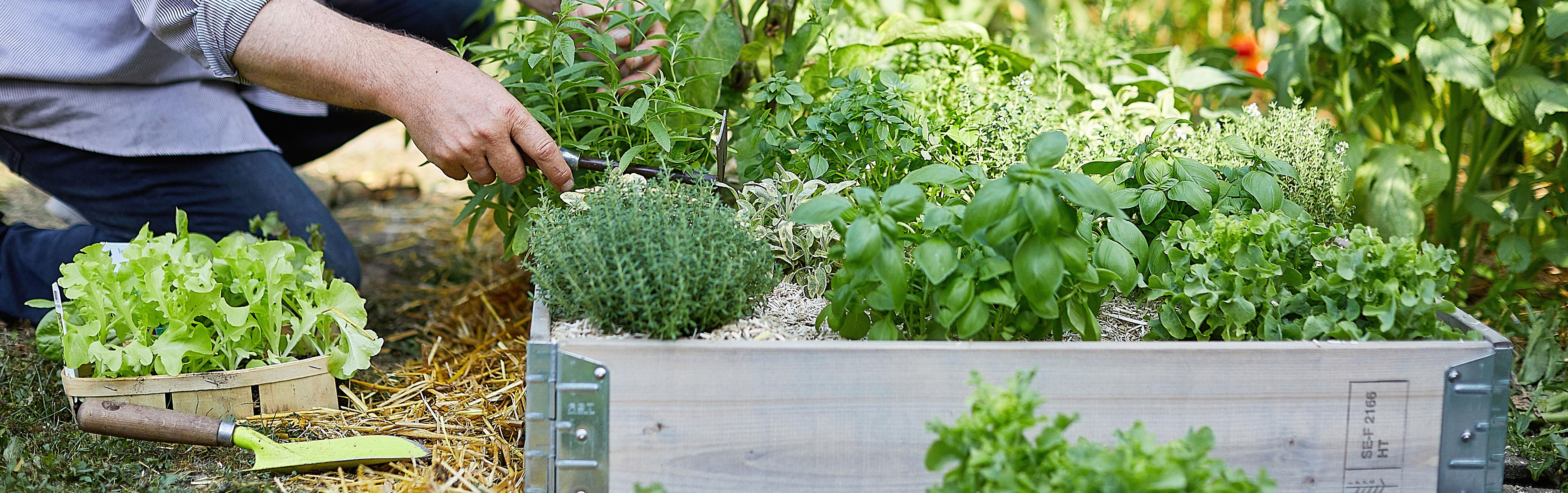 Carrés potagers et jardinières