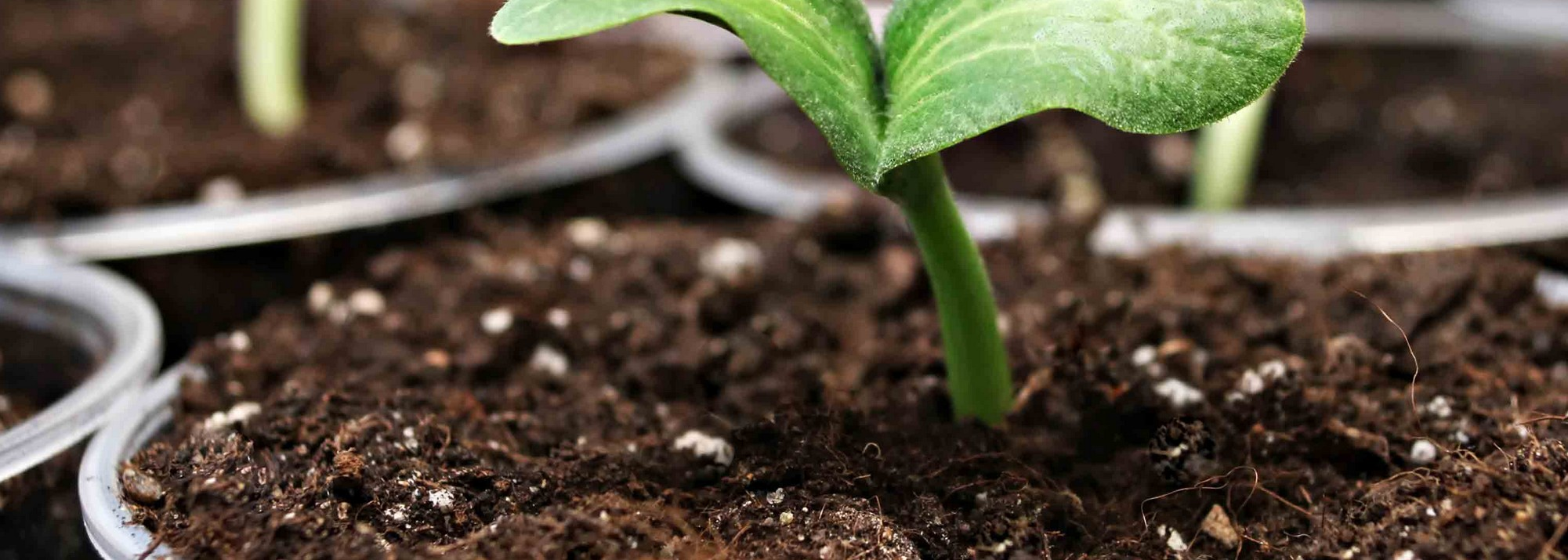 Terreaux plantes d'intérieur