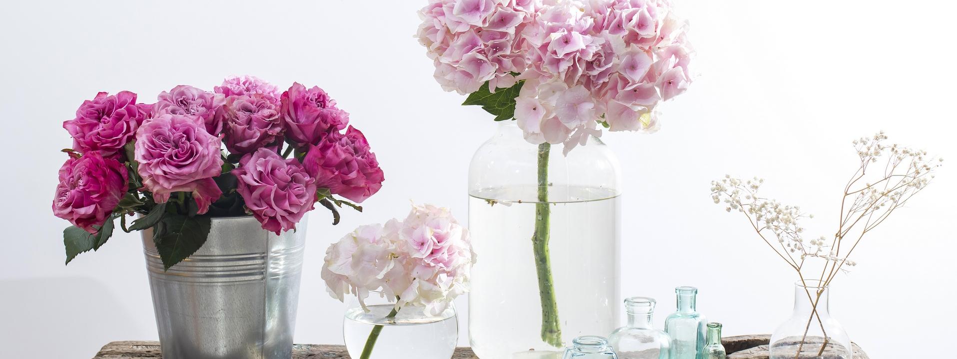 Fleurs et plantes stabilisées
