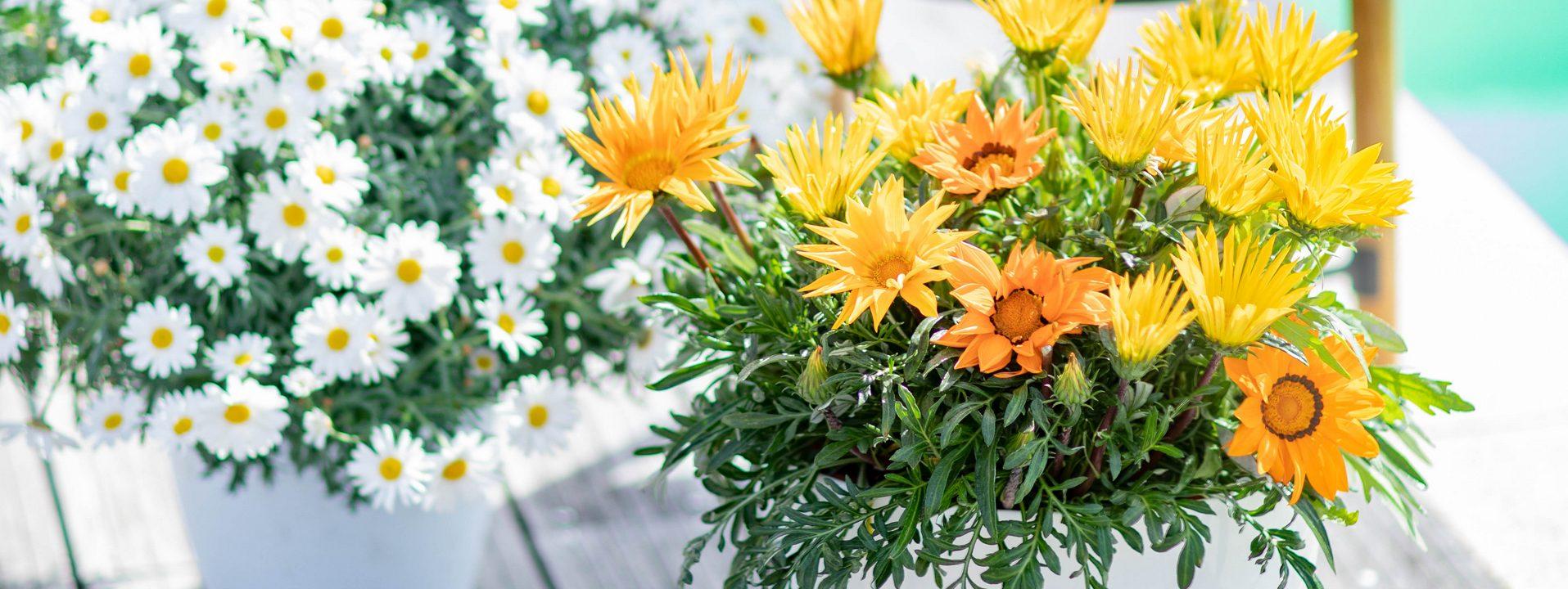 Plantes et fleurs méditerranéennes