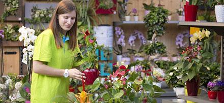 Rempotage et entretien de vos plantes