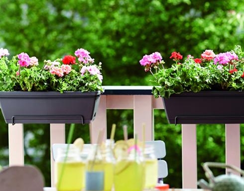 L'engrais pour plantes en pot