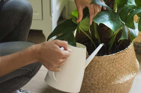 arroser-les-plantes-de-ma-maison_4