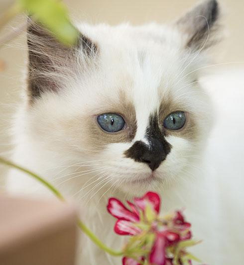 accueillir-un-chaton-chez-soi_4