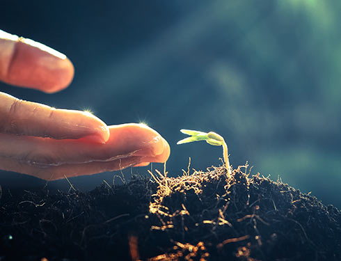 La préparation minutieuse des racines