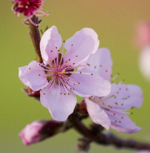 Jardinière épanouie : à la recherche du parfait accord végétal