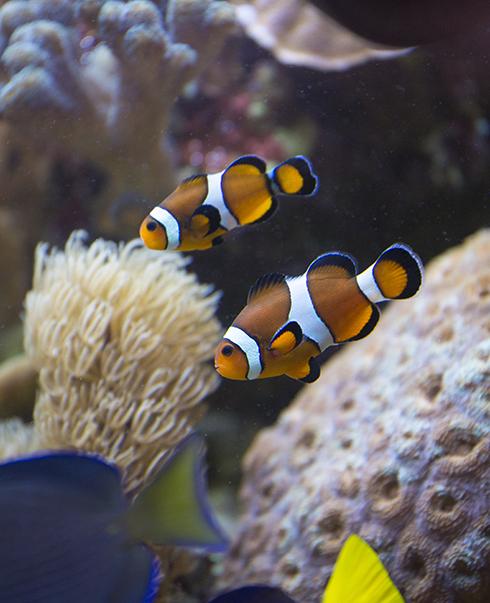Jour J : démarrer l'aquarium marin dans les règles de l'art