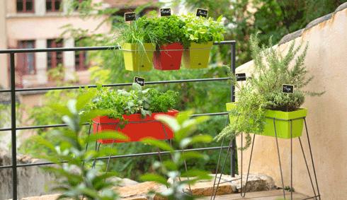 des plantes aromatiques sur mon balcon conseil balcon terrasse botanic botanic. Black Bedroom Furniture Sets. Home Design Ideas