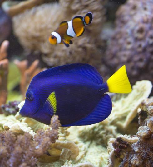 Des poissons en bonne sant conseil animalerie botanic for Grand bac a poisson