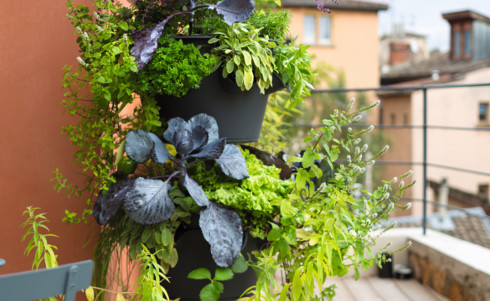 Des solutions malignes pour cultiver sur son balcon conseil balcon terrasse - Jardiner sur son balcon ...