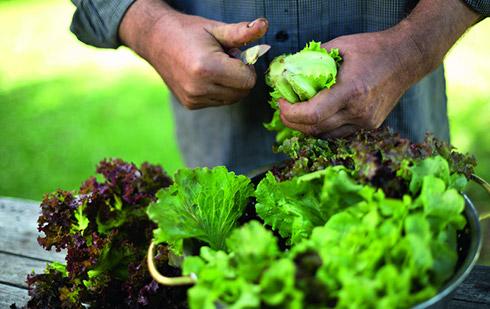 Assaisonner une salade comme il se doit