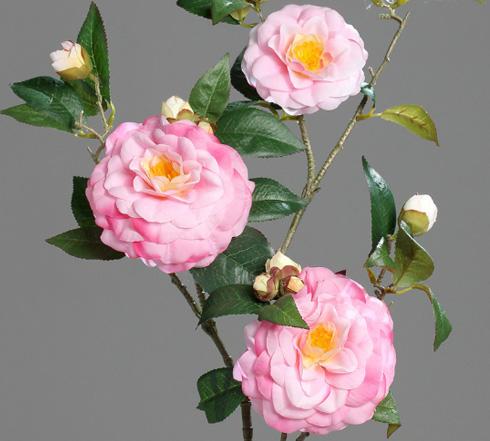 plantation du cam lia hiver en fleurs et jardin japonisant botanic. Black Bedroom Furniture Sets. Home Design Ideas