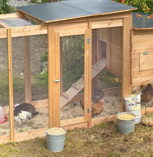 La poule : alliée du jardin et commis de cuisine