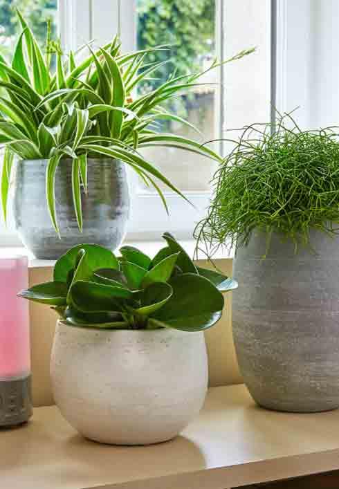 Collection plantes graphiques Botanic®: un feuillage, un style
