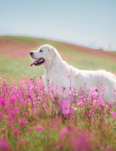 Phytothérapie: une méthode douce pour soulager nos amies les bêtes