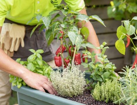 preparer-le-jardin-pour-le-printemps_5