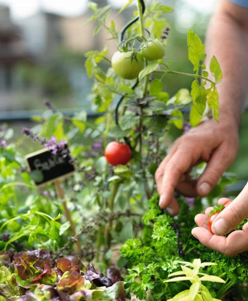 La récolte parfaite pour ne rien perdre en bienfaits et gourmandise