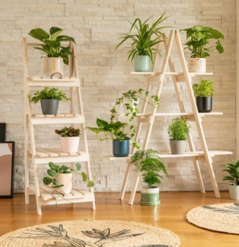 Plante d'intérieur prend racine : grand rempotage de printemps