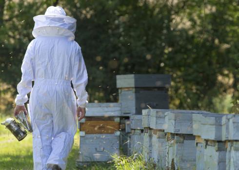 1. Déclarer ses ruches