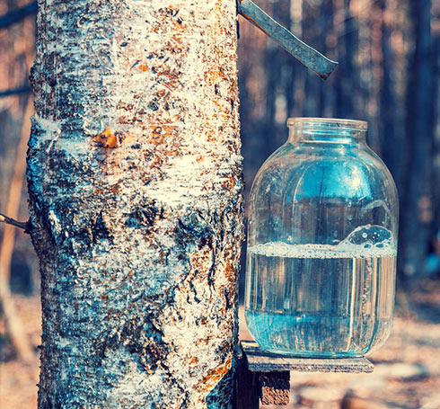Cure de printemps : petit guide pour chasser les toxines hivernales