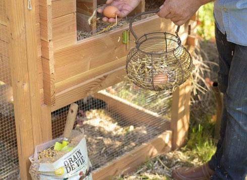 Une alimentation saine et complète pour nos poules
