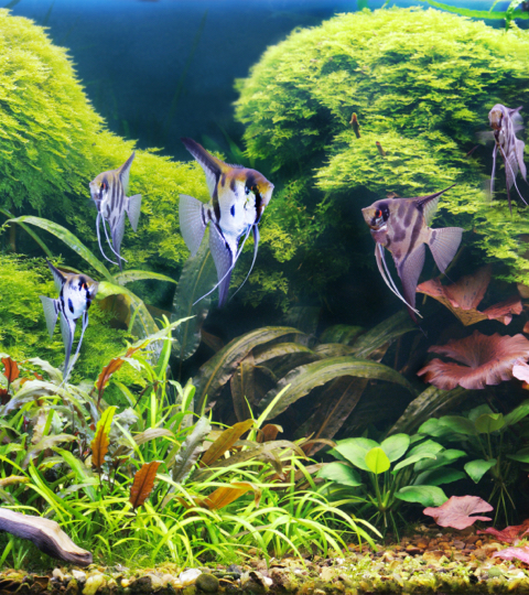 Aquascaping : quand l'aquarium devient œuvre d'art