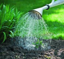 Arroser au plus près des plantes!