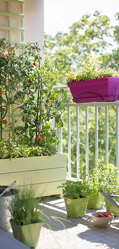 Composer une jardinière de printemps qui éveille les sens