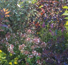Composez Votre Haie Vive Conseil Jardin Botanic Botanic