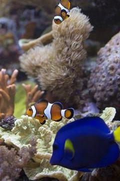 Corail : cultiver et protéger ce précieux joyau des mers